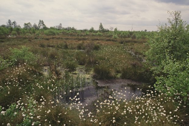 Blanket bog - Thorne Moors Thorne Moors Thorne Crowle And Goole Moors Site of Special Scientific Interest Humberhead Peatlands National Nature Reserve South Yorkshire Copyright Natural England/Peter Wakely