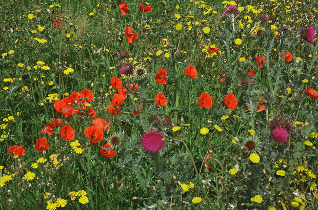 Wildflowers on edge of field Copyright Natural England