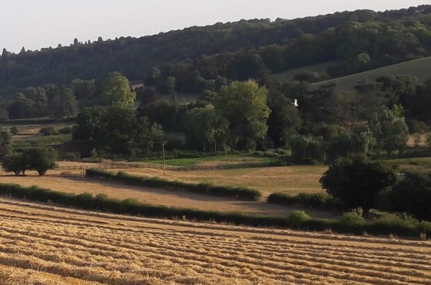 Barley-straw-1-1.jpg
